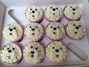 bichon frisé cupcakes
